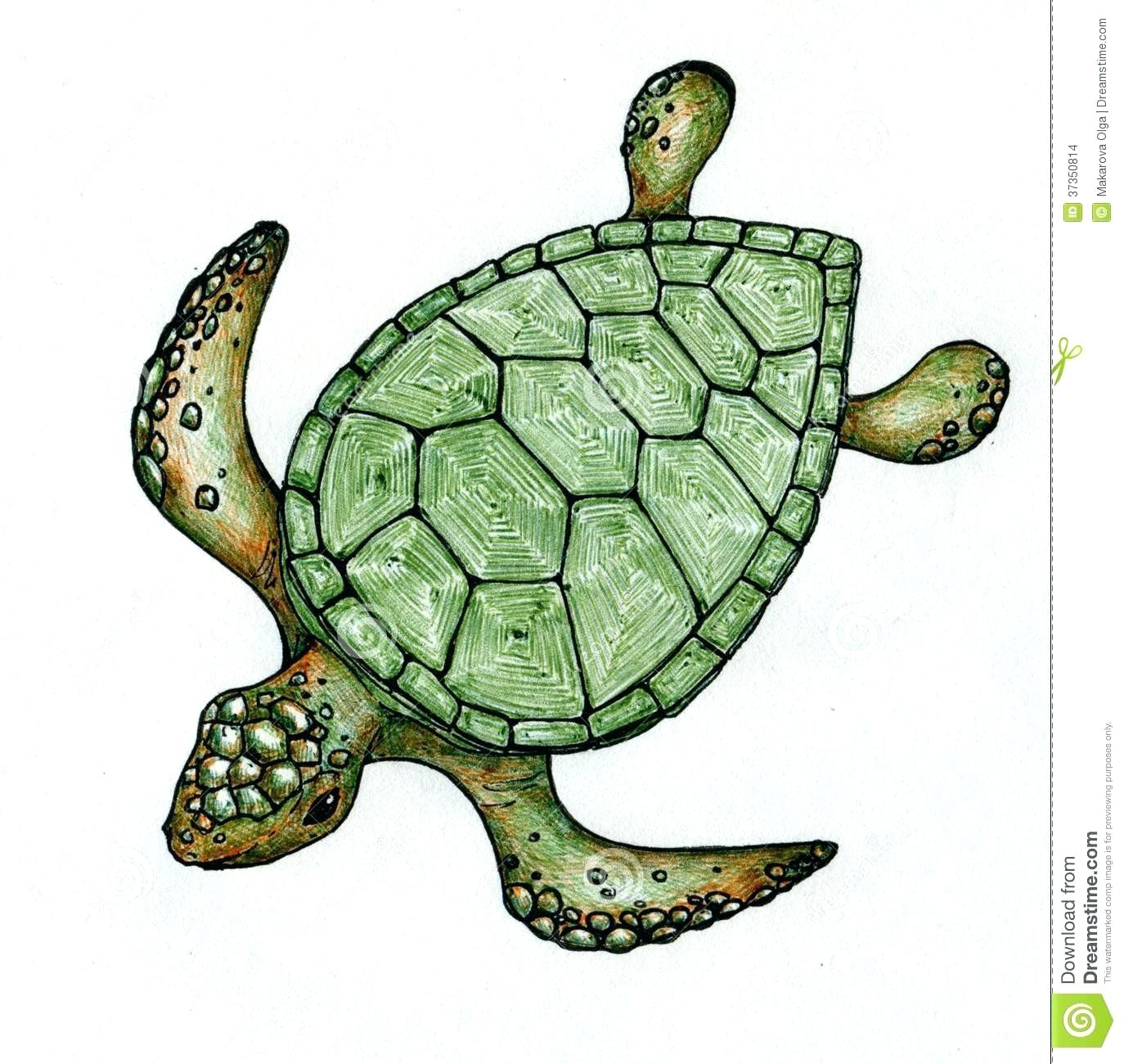 1374x1300 What Colors Are Sea Turtles Jakejames Club