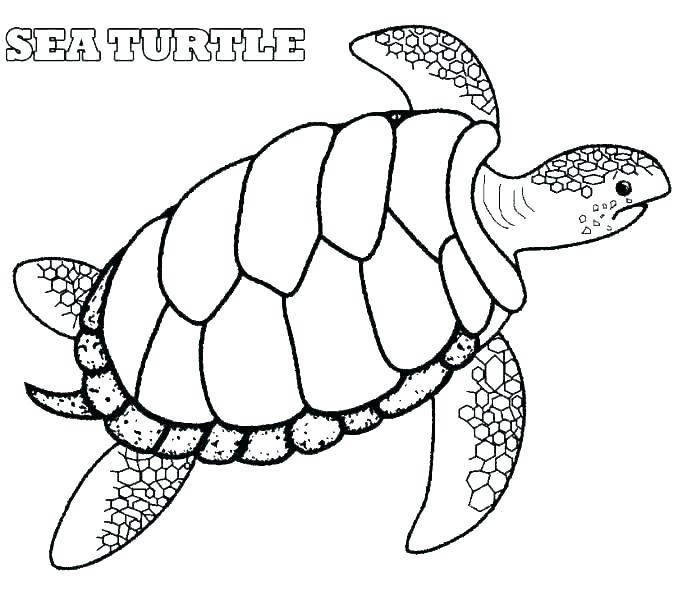 678x600 Drawn Sea Turtle Coloring