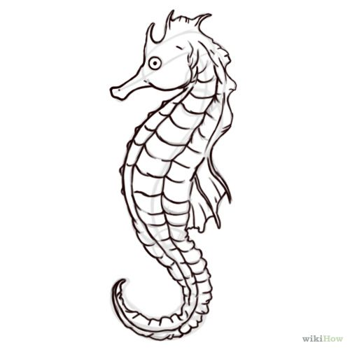500x500 Realistic Seahorse Drawing