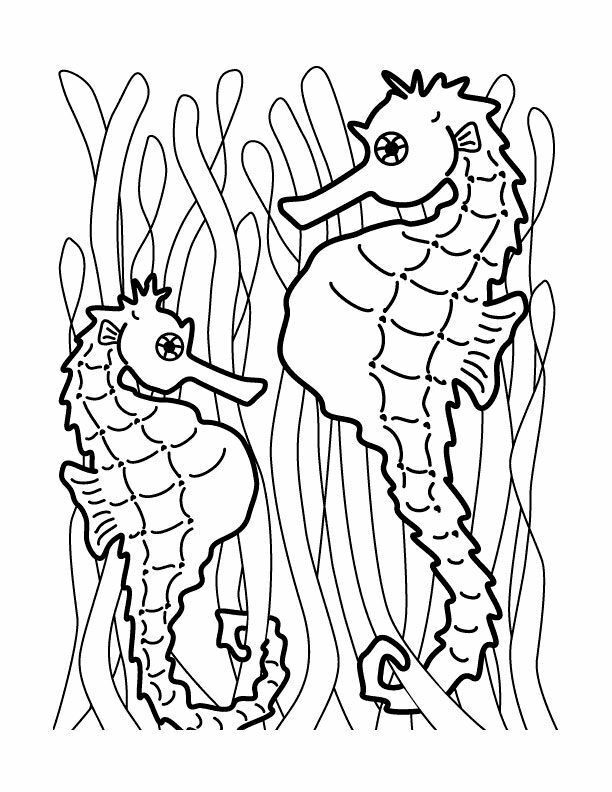 612x792 Attractive Seahorse Coloring Pages Existplayer Club