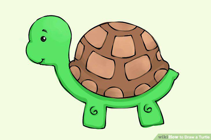728x485 Easy Turtle Drawing Full Size Of To Draw A Realistic Turtle Step
