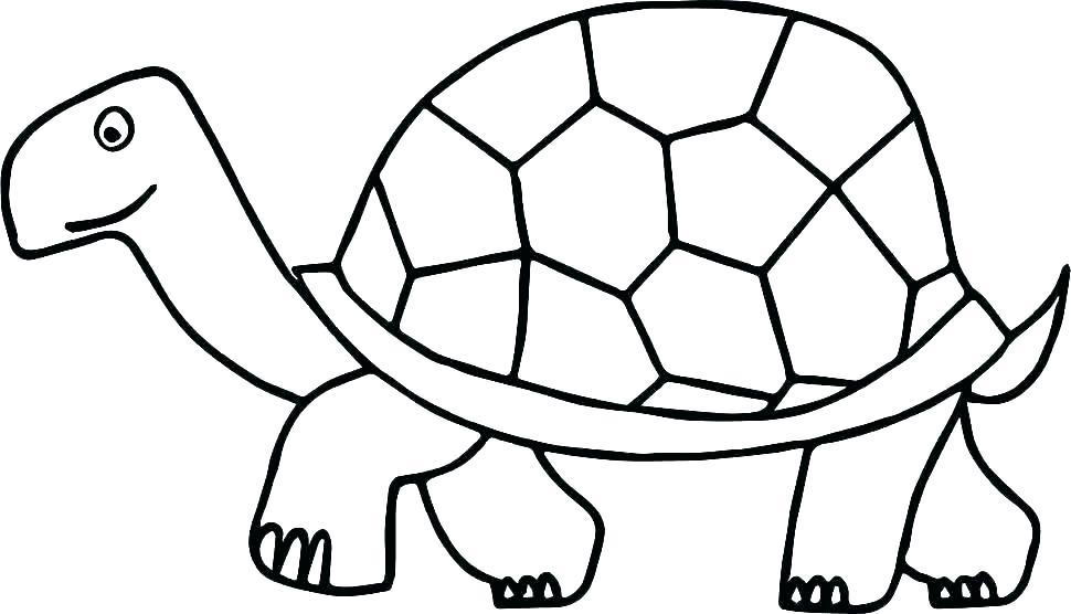 970x556 Sea Turtle Coloring