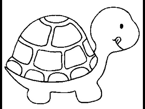 480x360 Turtle Drawing, Pencil, Sketch, Colorful, Realistic Art Images