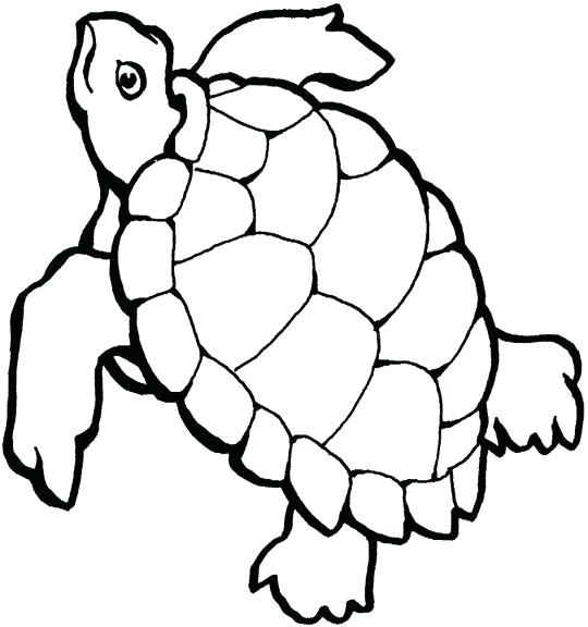 540x576 Turtle Drawing Outline Sea Turtle Outline Luxury Coloring Pages