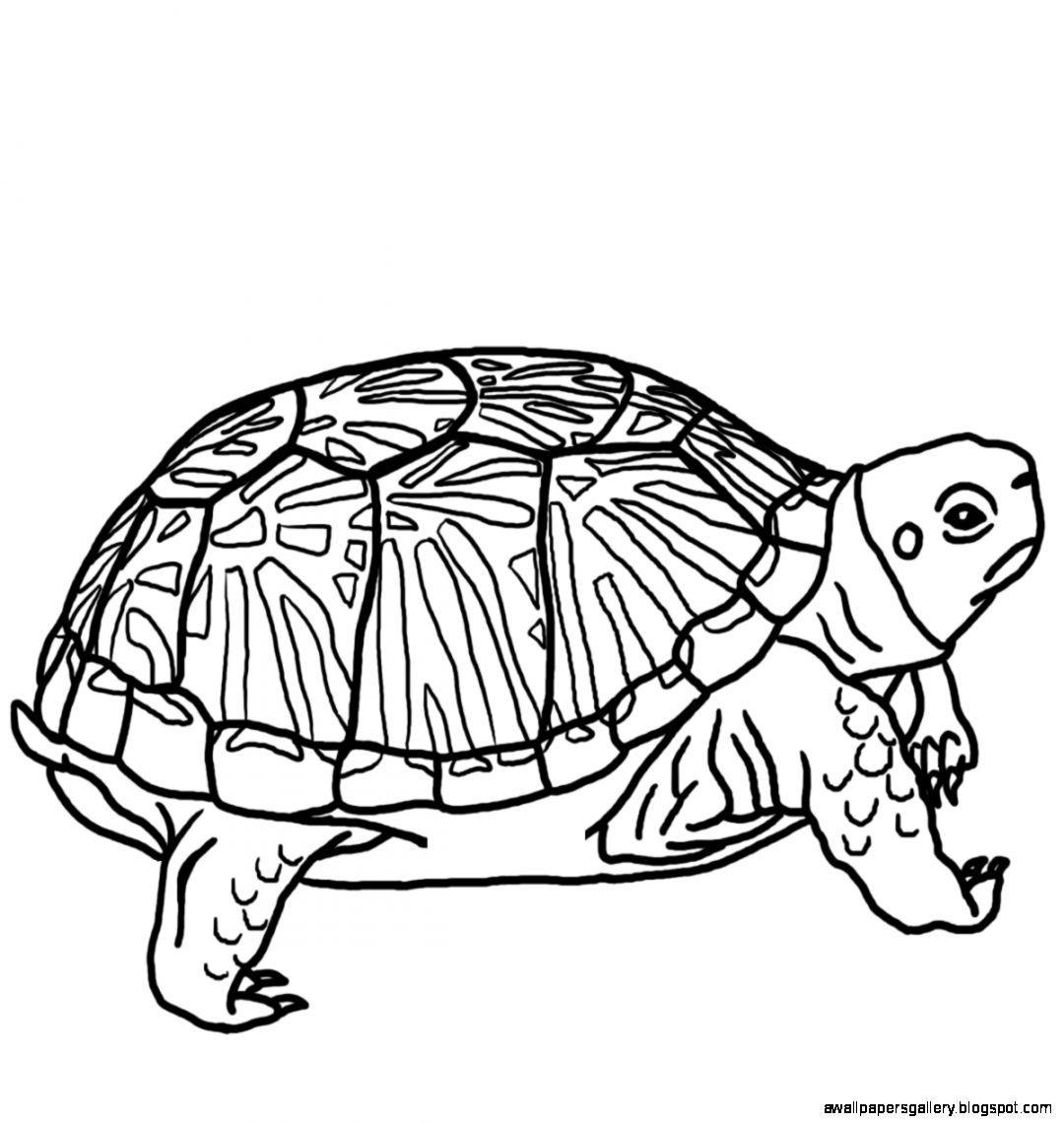 1080x1140 Turtle Drawing Free Download