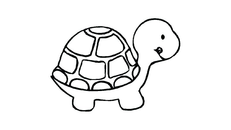800x450 Draw A Turtle Easy Turtle Drawing Step