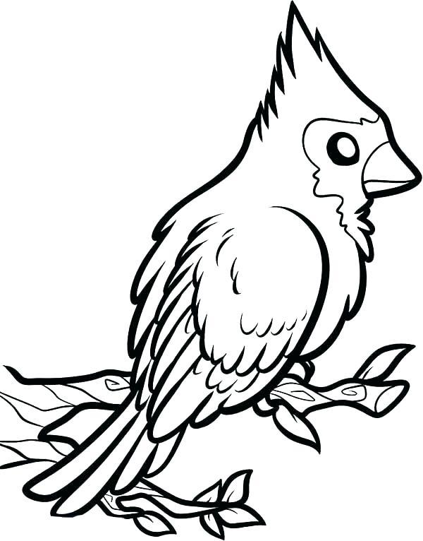 600x766 cardinal coloring northern cardinal bird coloring pages