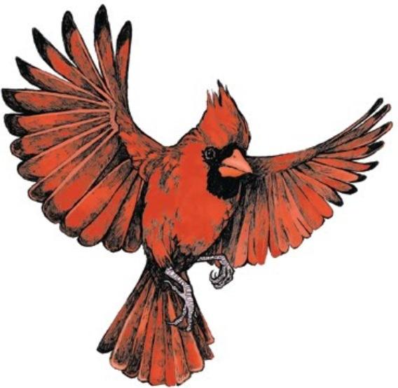 568x554 flying cardinal inked inspiration cardinal tattoos, red bird