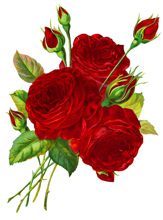 525x709 red roses drawing help rose clipart, rose pictures, rose