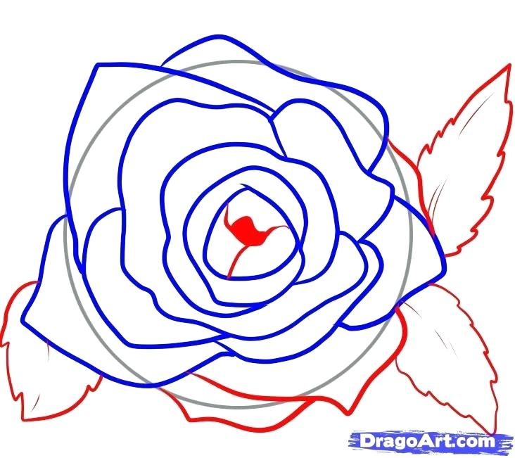 732x651 How To Draw Roses Drawing Roses Draw Roses Tutorial