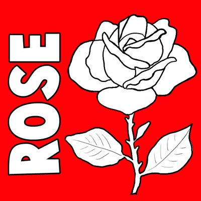 400x400 How To Draw Roses Step