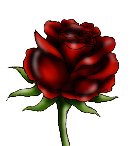 579x620 How To Draw A Red Rose Steps