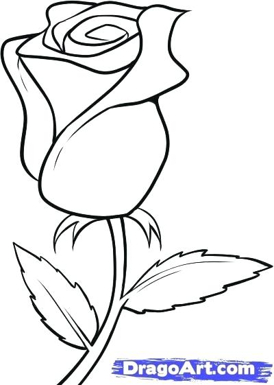 400x561 Roes Drawing How To Draw Roses Dead Rose Drawing Simple