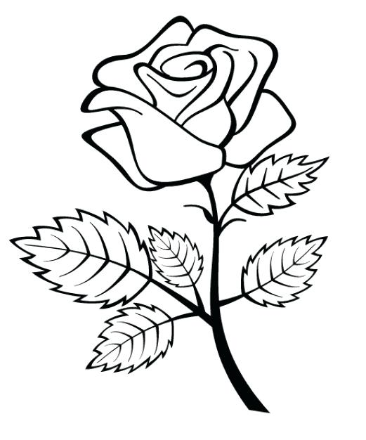 521x626 Draw Simple Rose