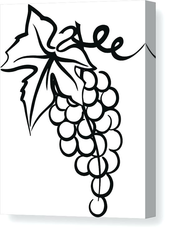 548x750 Grapes Drawing Images