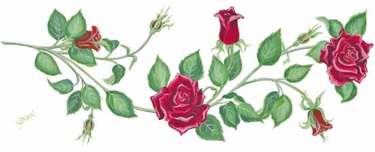740x301 Border Rose Vine Rose Design Drawing