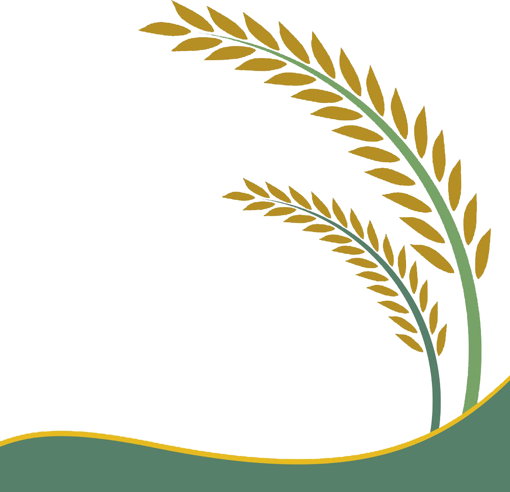 1000x965 cliparts for free download rice clipart rice field and use