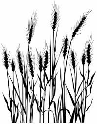 199x254 great rice images rice packaging, rice plant, free vector images