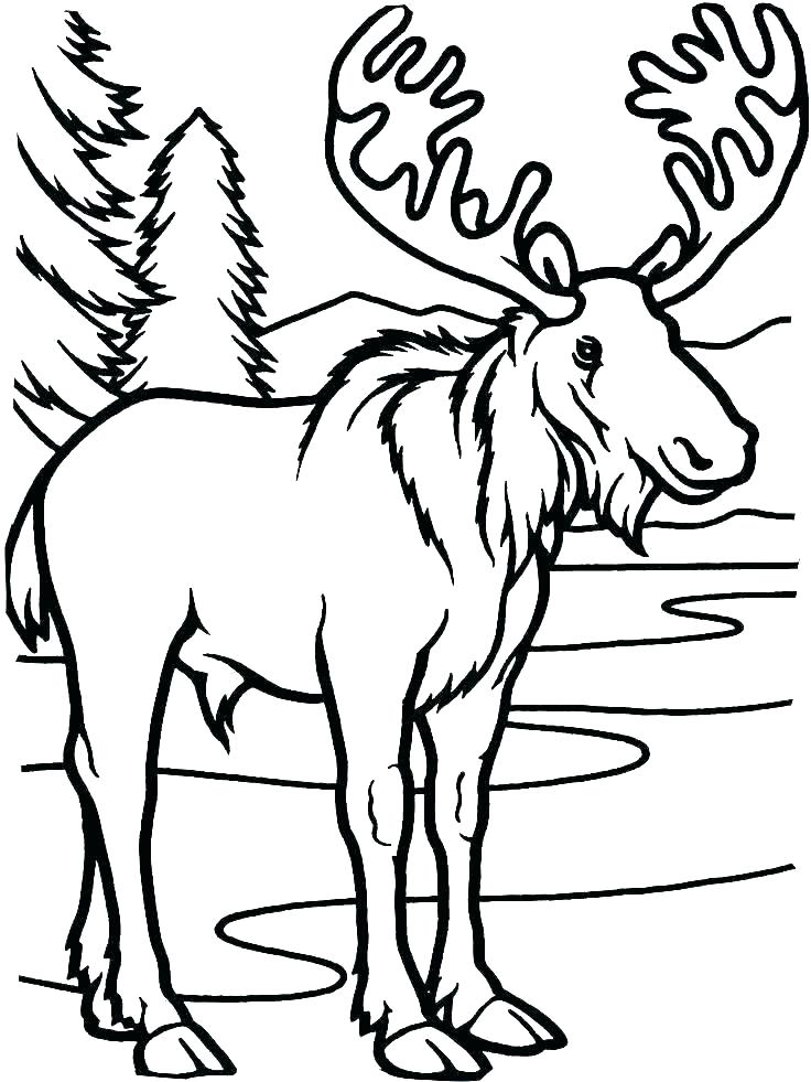 736x981 how to draw moose moose drawings draw moose easy