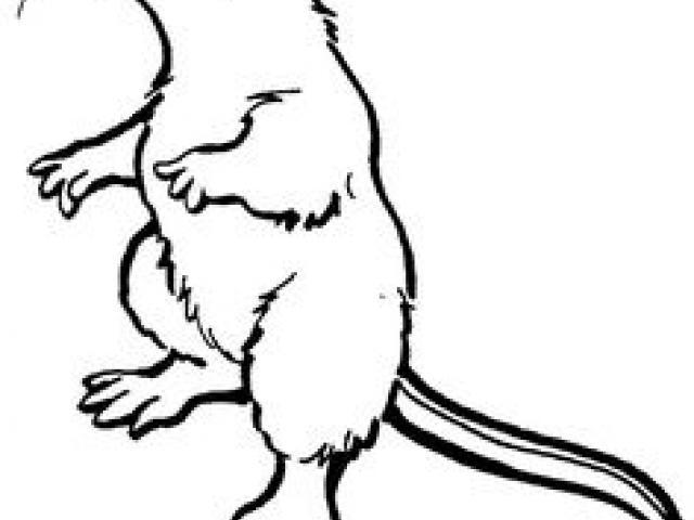 640x480 free drawn rodent, download free clip art
