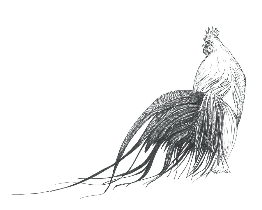 900x720 Drawing Of A Rooster Adding The Details Of The Head Drawing