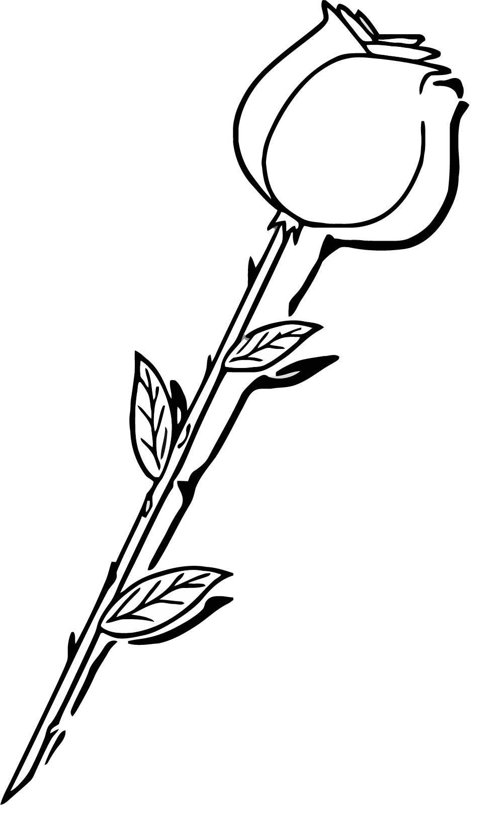 1000x1617 Long Stem Rose Coloring