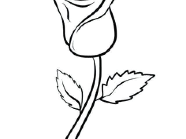 640x480 Drawn Rose Drawn Rose Bush Beginner Drawn Rose Easy
