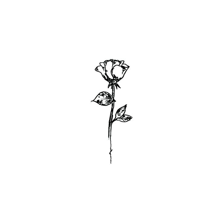 736x736 Image Result For Rose And Stem Drawing Art Tattoos, Finger