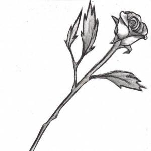 300x300 Long Stem Rose Black And White B Lazttweet