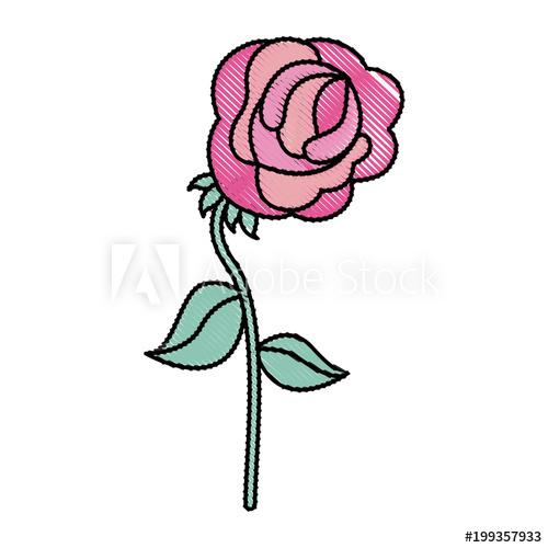 500x500 Flower Rose Stem Leaves Decoration Vector Illustration Drawing