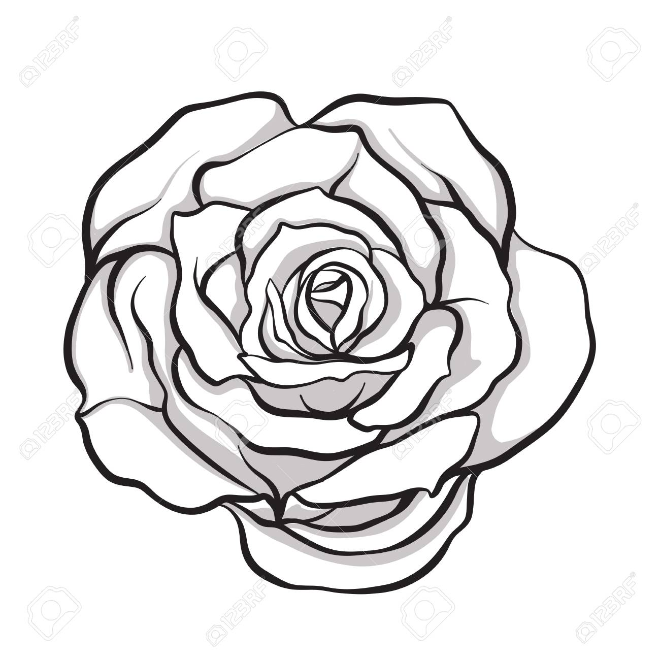 1300x1300 Huge Collection Of 'rose Line Drawing' Download More Than
