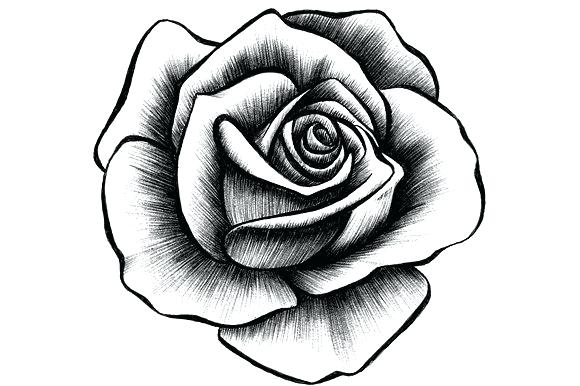 580x386 A Drawing Of A Rose Drawing Of A Rose Rose Drawing Easy With Color