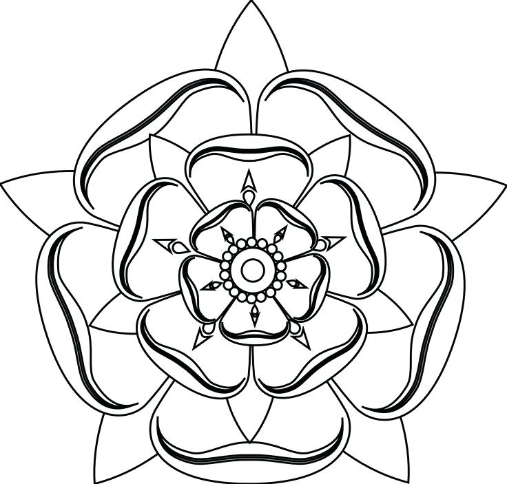 736x703 Line Drawing Of A Rose Rose