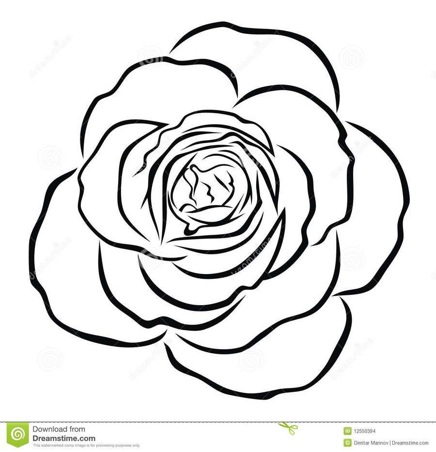 900x932 Outline Drawing Of Rose Flower