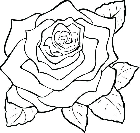 564x537 Rose Line Drawing Clip Art Architectures In Spain Hoteles