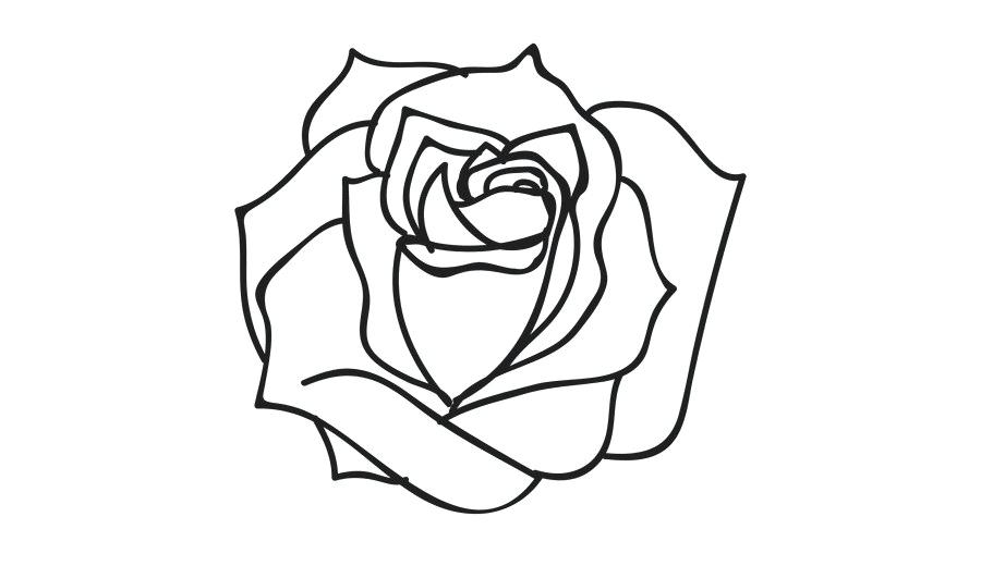 900x520 Rose Line Drawing Rose Line Drawing Rose Pattern Line Drawing