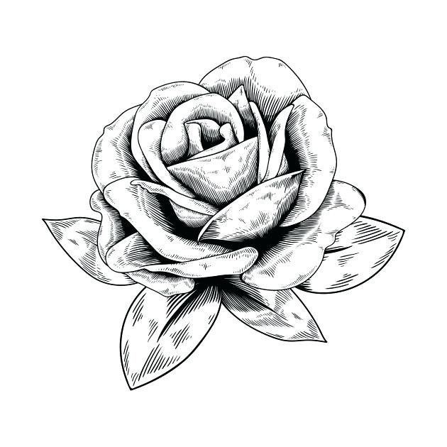 630x630 Drawing Rose Art Description Rose Drawing Picture All