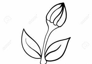 300x210 Flower Bud Drawing How To Draw A Rose Bud With Stem For Beginners
