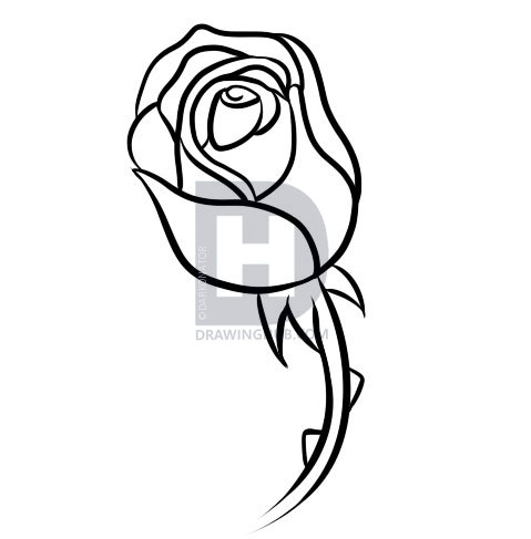 479x487 How To Draw A Rose Bud, Step
