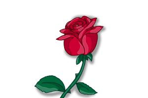 300x200 How To Draw A Rose Bud