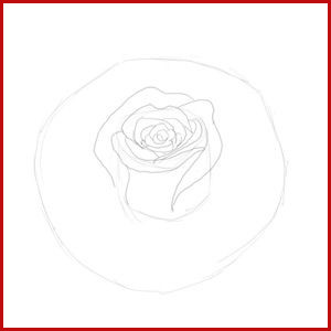 300x300 Rose Bud Drawing Easy Steps To Draw A Flower How To Draw