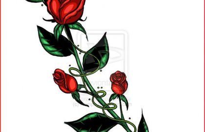420x270 Rose Bud Drawing Rose Flower Drawing Step Step