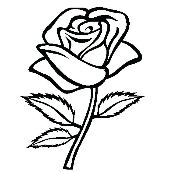 554x565 Rose Line Drawing How Draw A Simple View How Simple Rose Bud Line