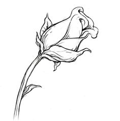 236x239 Collection Of 'rose Buds Drawing' Download More Than Images