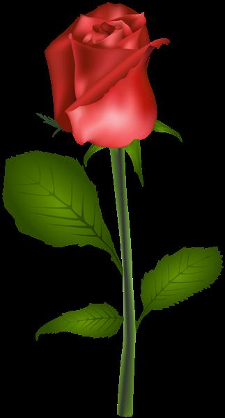 323x600 Red Rose Transparent Clip Art Image Florals Clip Art, Art