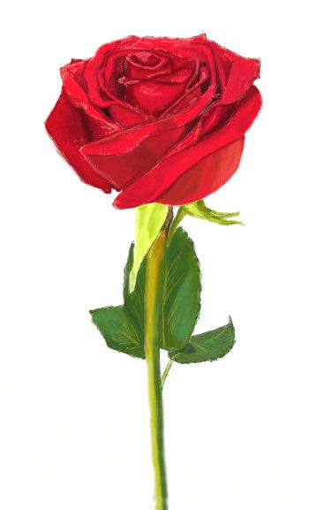 359x577 Rose Drawing Aquarelle De Fleurs
