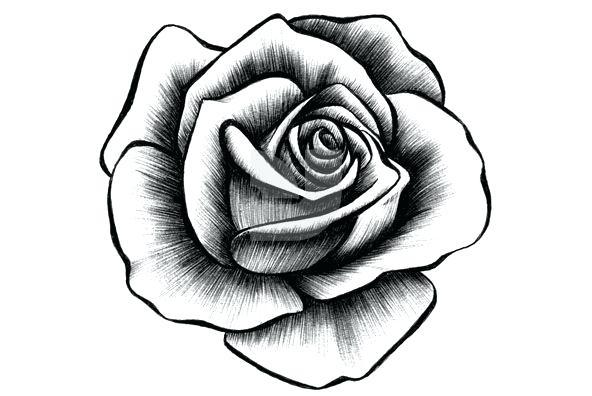 592x396 a rose drawing easy rose drawing rose drawing tutorial