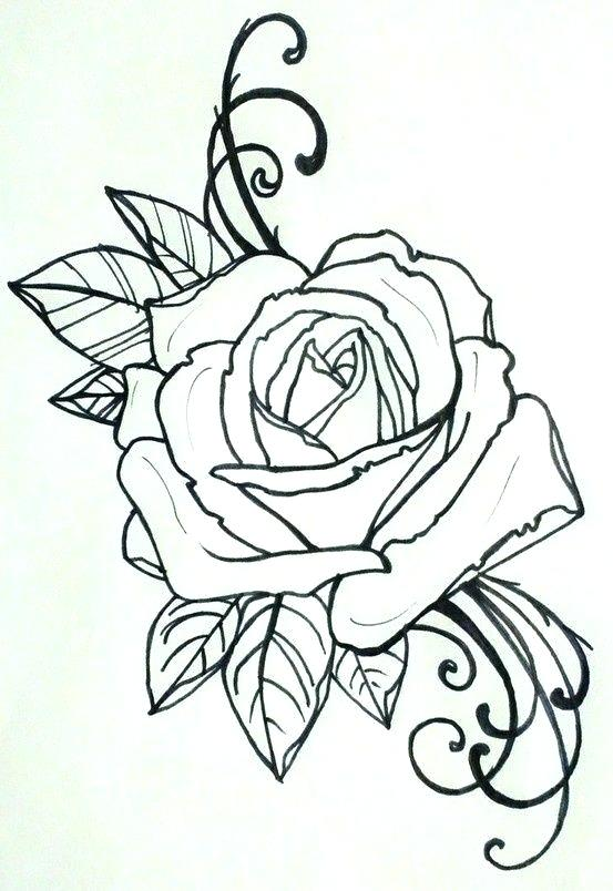 553x804 roses tattoo outline rose outline drawing rose outline tattoo rose