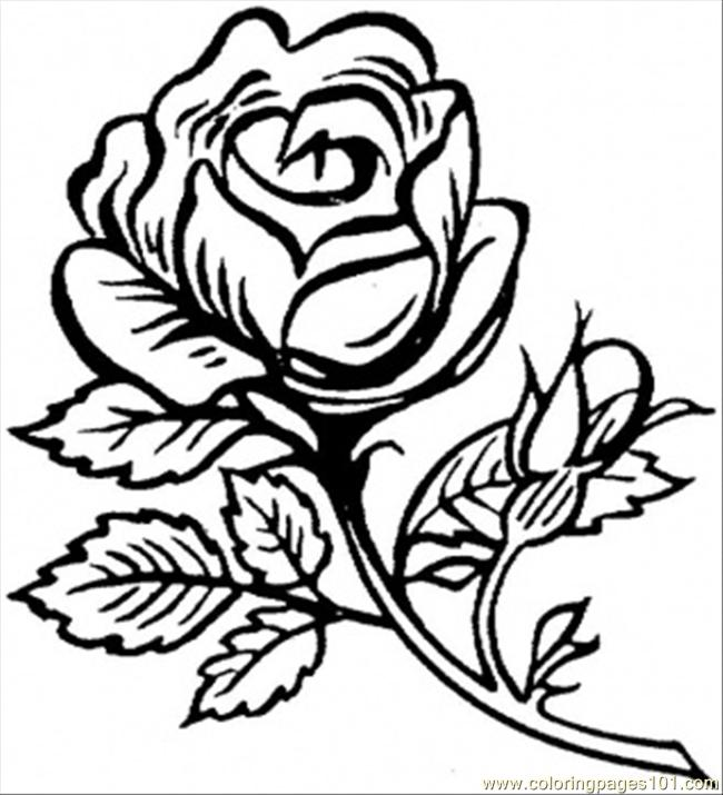 Rose Drawing Color