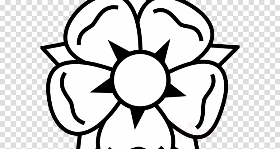 900x480 Drawing, Rose, Flower, Transparent Png Image Clipart Free Download